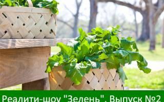 Адаптивный дизайн, комментарии, РСЯ — второй выпуск «Зелени»