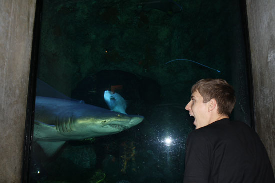 акула в бостонском аквариуме