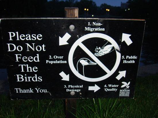 табличка, запрещающая кормить птиц