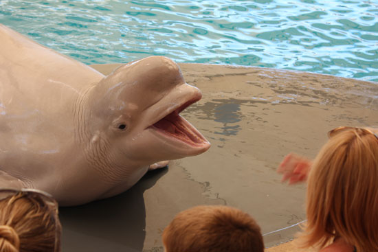 белый кит