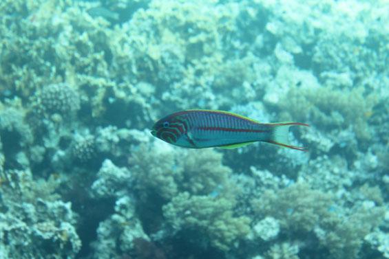 рыбка в красном море