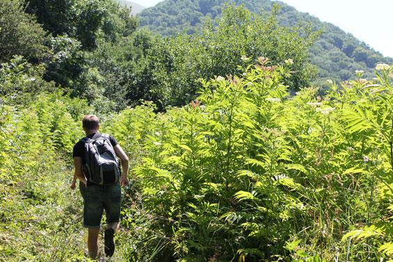 джунгли горы Бештау