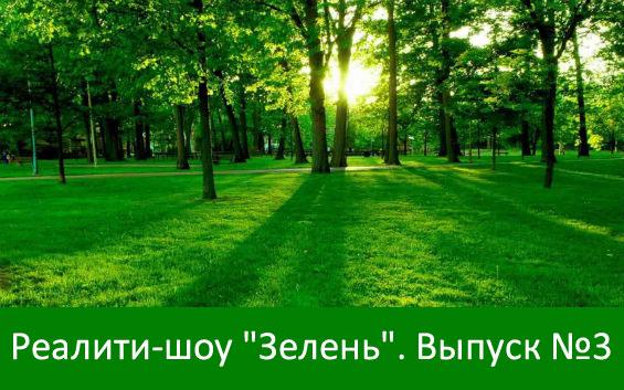 деревья и трава
