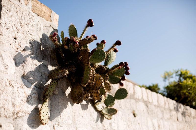 кактусы в Черногории