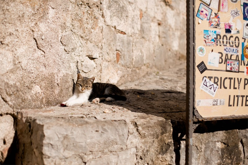 кошка в Которе