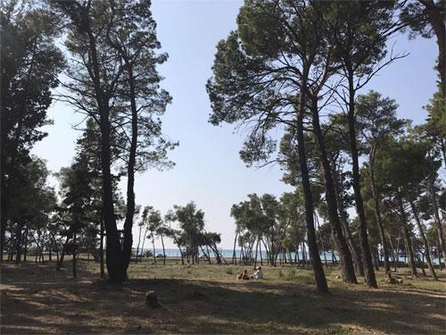 лес около пляжа
