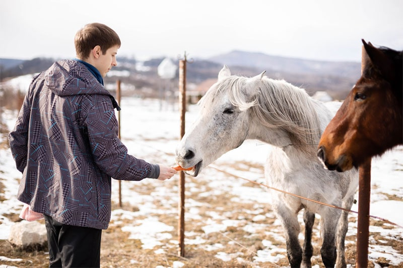 кормлю лошадей морковкой
