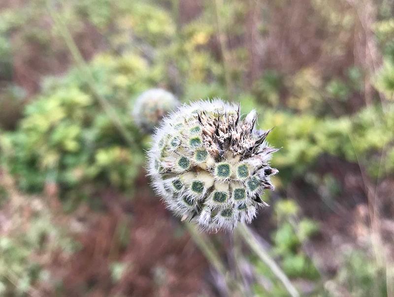 космо-растение