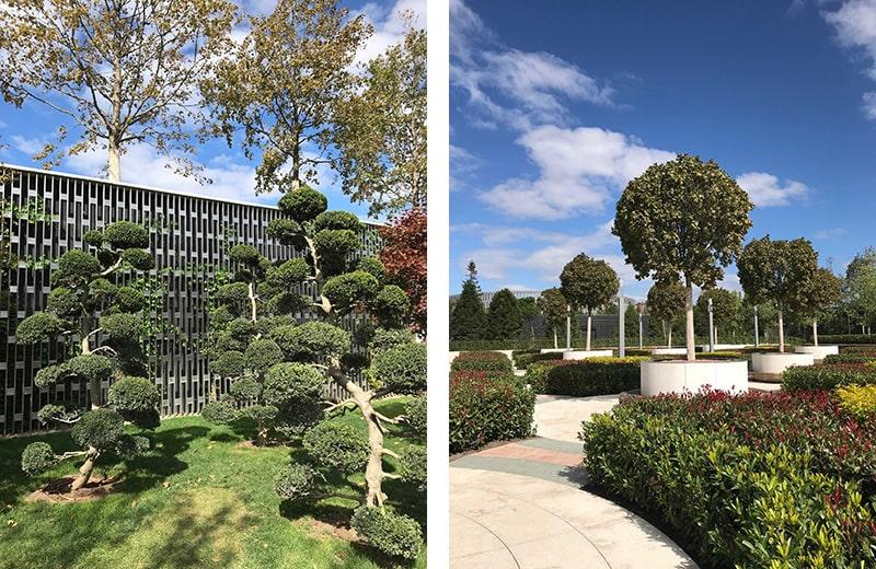 разные деревья