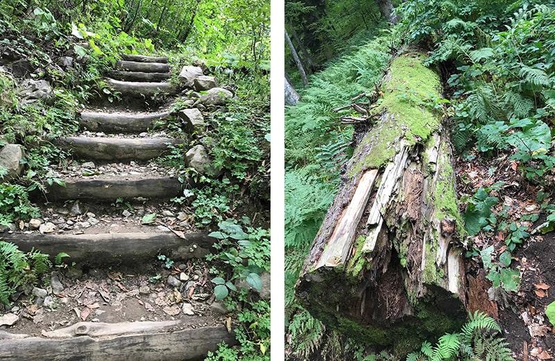 ступени и упавшее дерево