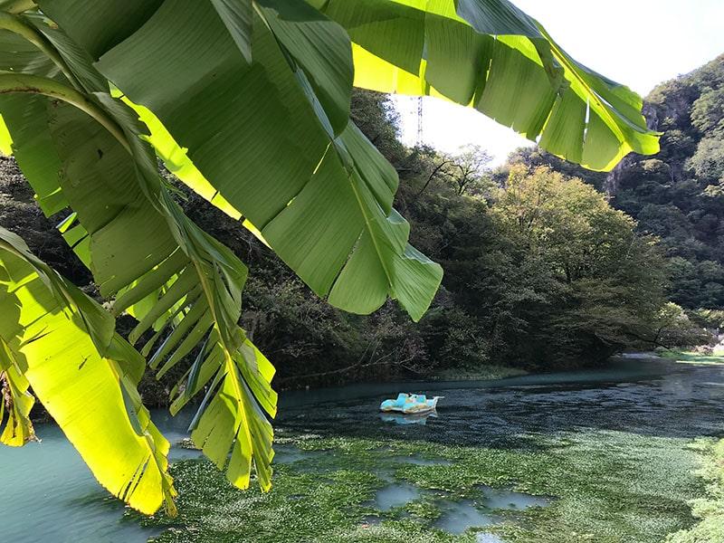 пальма и катамаран