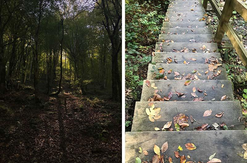 лес и лестница