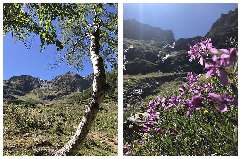 береза и горные цветы