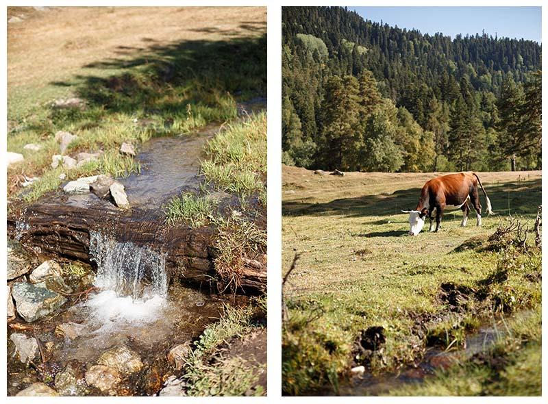 корова и ручей