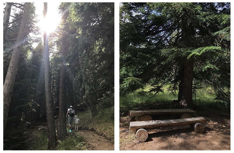 поход в горном лесу