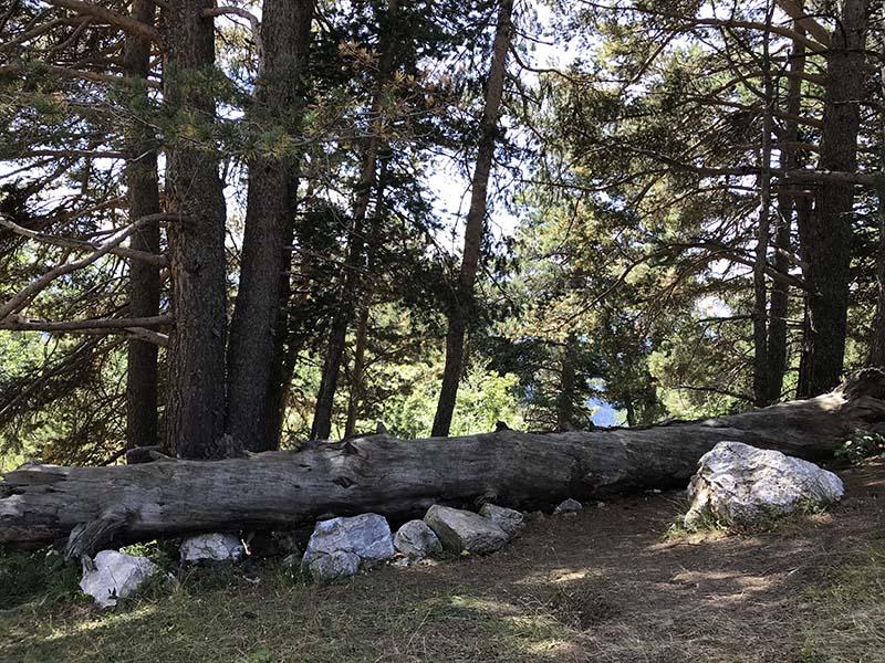 сваленное дерево