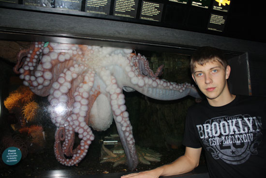 осьминог в бостонском аквариуме