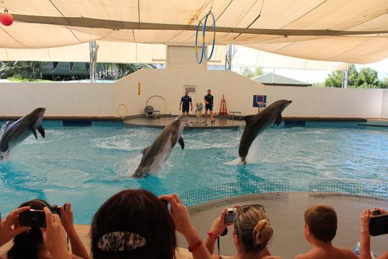дельфины (дельфинарий)