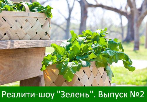 """Второй выпуск реалити-шоу """"Зелень"""""""