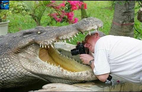 голова человека в пасте крокодила
